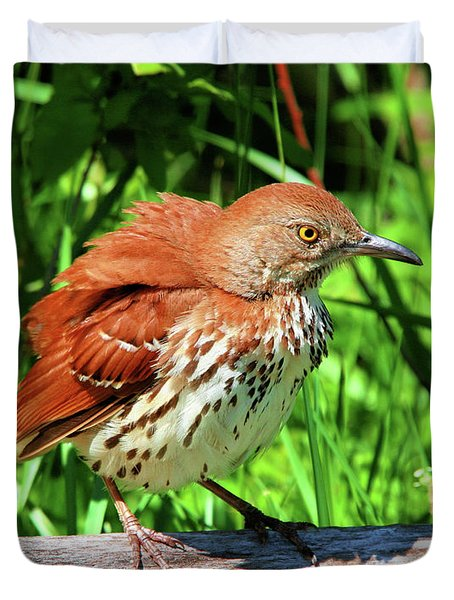 Brown Thrasher Duvet Cover