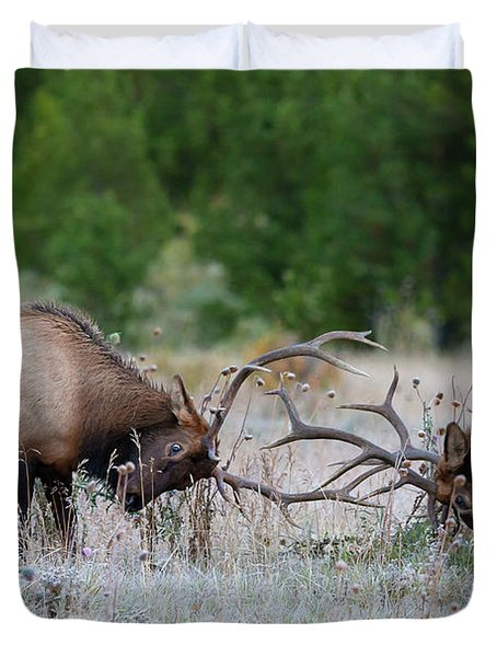 Bull Elk Battle Rocky Mountain National Park Duvet Cover