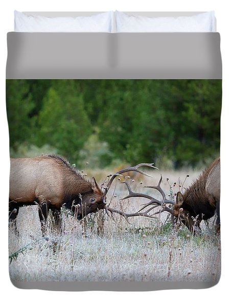 Duvet Cover featuring the photograph Bull Elk Battle Rocky Mountain National Park by Nathan Bush
