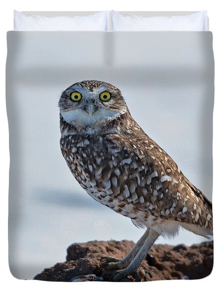 Burrowing Owl In The Snow  Duvet Cover