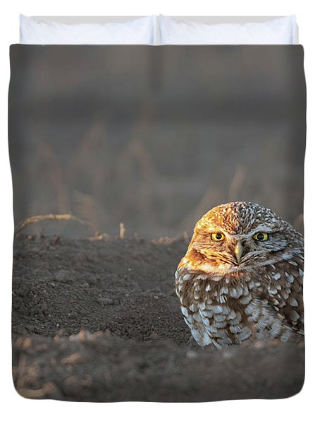 Burrowing Owl Late Evening Duvet Cover