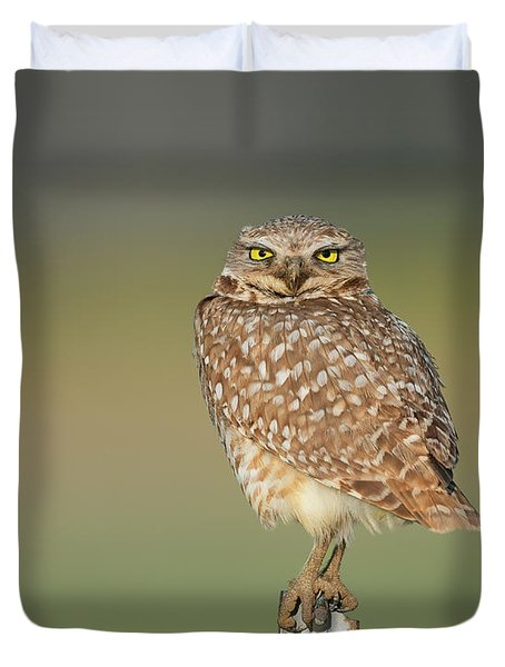 Burrowing Owl Lookout Duvet Cover