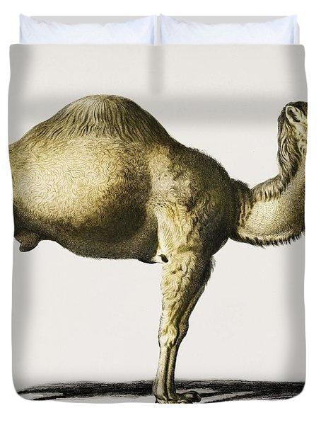 Camel  Camelus  Illustrated By Charles Dessalines D' Orbigny  1806-1876  Duvet Cover