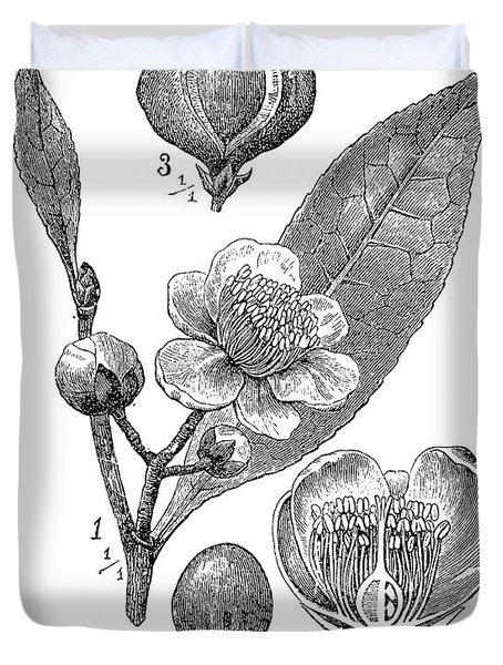 Camellia Sinensis, Botanical Vintage Engraving Duvet Cover