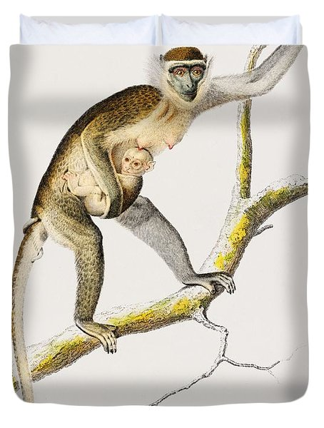 Cercopithecus Griseus  Guenon Grivet  Illustrated By Charles Dessalines D' Orbigny  1806-1876  Duvet Cover