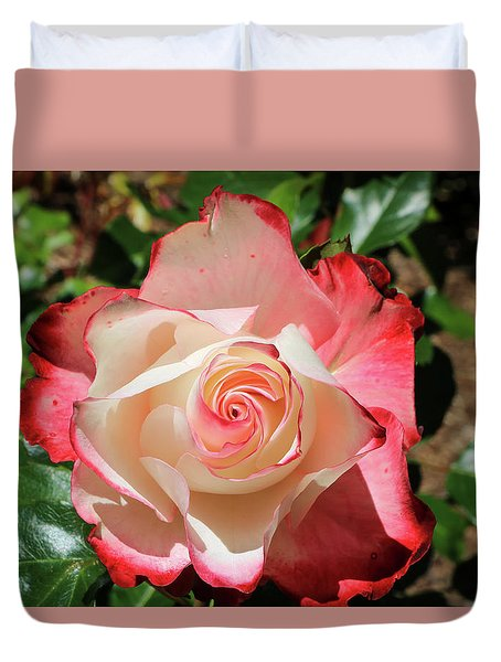 Duvet Cover featuring the photograph Cherry Parfait Rose by Dawn Richards