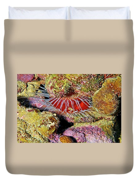 Clam Up Duvet Cover