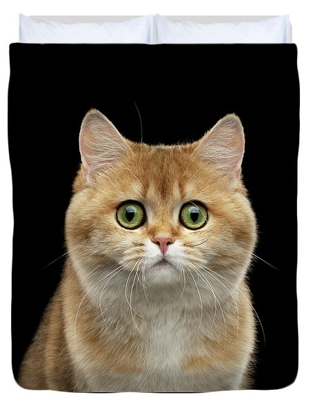 Close-up Portrait Of Golden British Cat With Green Eyes Duvet Cover