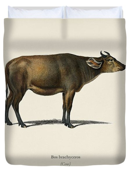 Cow  Bos Brachyceros  Illustrated By Charles Dessalines D' Orbigny  1806-1876  Duvet Cover