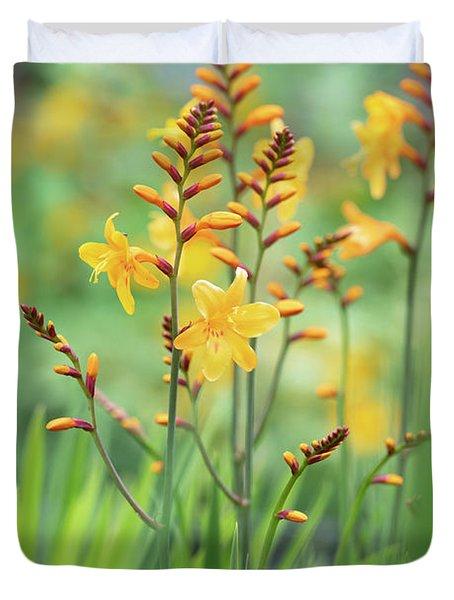 Crocosmia Buttercup In Flower  Duvet Cover