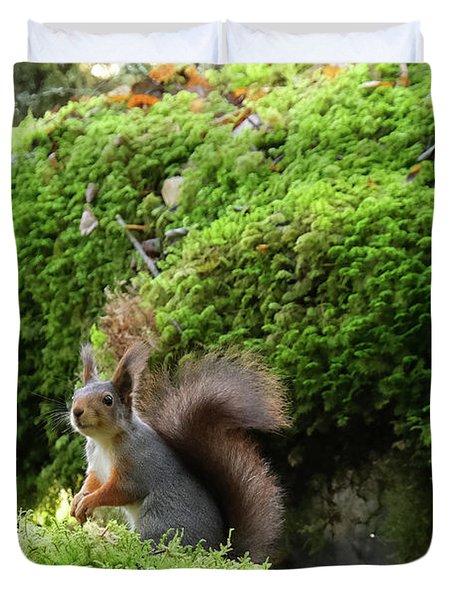 Curious Squirrel Duvet Cover