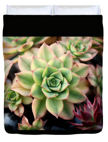Duvet Cover featuring the photograph Cute Succulent by Top Wallpapers