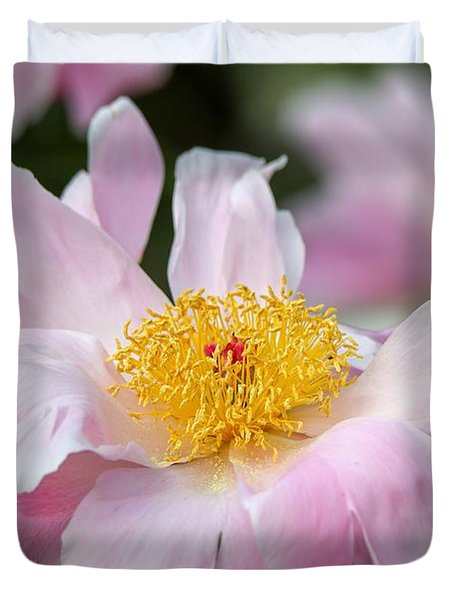 Delicate Pink Peony Duvet Cover