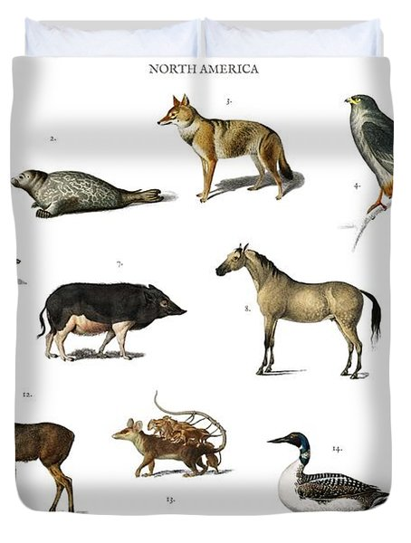 Different Types Of Animals Illustrated By Charles Dessalines D' Orbigny  1806-1876  Duvet Cover