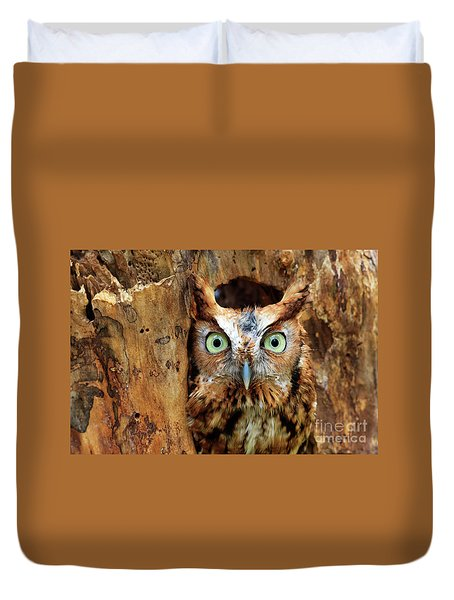 Eastern Screech Owl Perched In A Hole In A Tree Duvet Cover