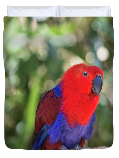Eclectus Parrot Duvet Cover