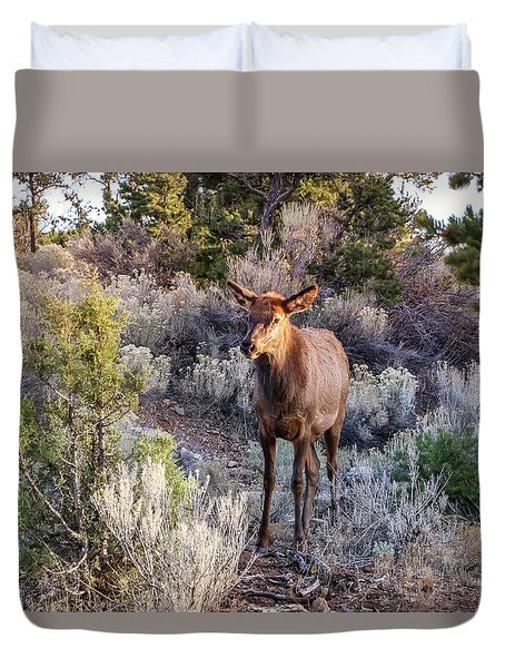 Duvet Cover featuring the photograph Elk Cow 2, Grand Canyon by Dawn Richards