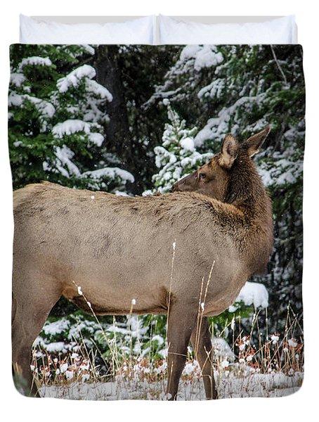Elk Grazing In The Grand Teton National Park Duvet Cover