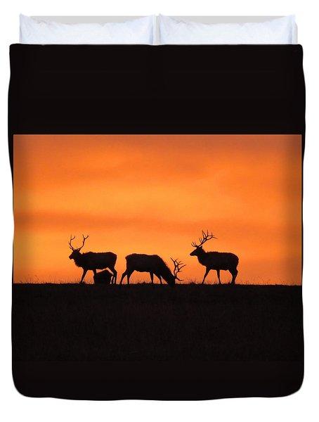 Elk In The Morning Light Duvet Cover