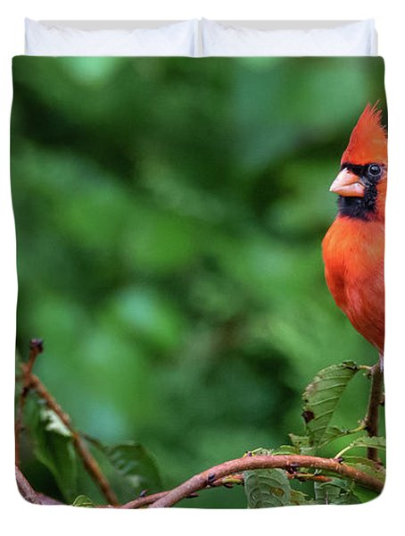 Envy - Northern Cardinal Regal Duvet Cover