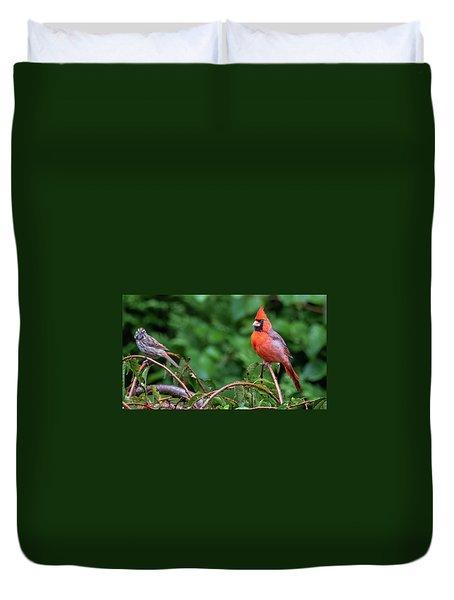 Envy - Northern Cardinal Regal Duvet Cover