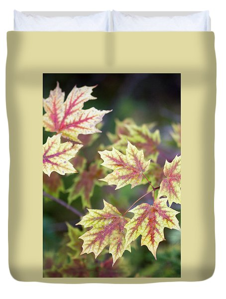 Fall Red And Yellow Leaves 10081501 Duvet Cover