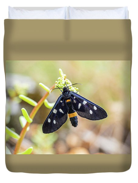 Fegea - Amata Phegea -black Insect With White Spots And Yellow Details Duvet Cover