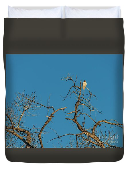 Duvet Cover featuring the photograph Ferrunginous Hawk In Tree by Jon Burch Photography