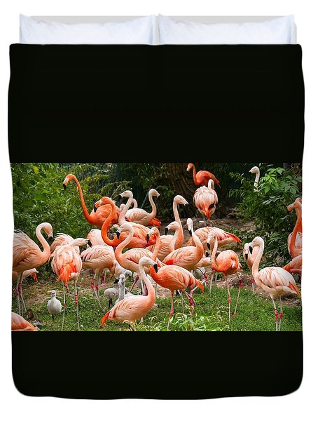 Duvet Cover featuring the photograph Flamingos Outdoors by Top Wallpapers