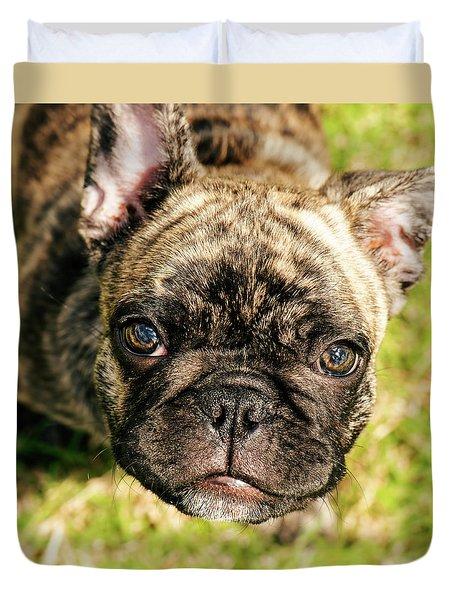 French Bull Dog Duvet Cover