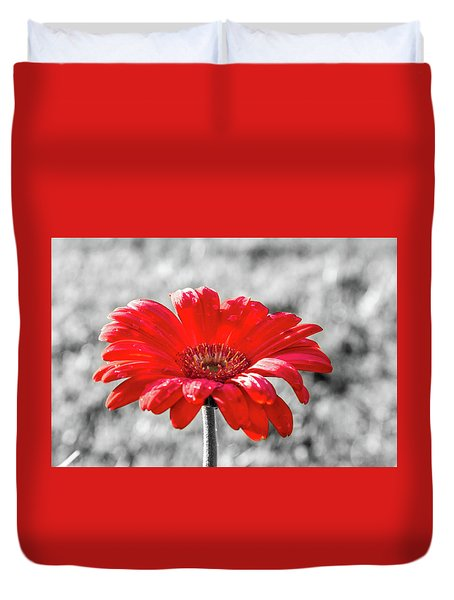 Duvet Cover featuring the photograph Gerbera Daisy Color Splash by Dawn Richards