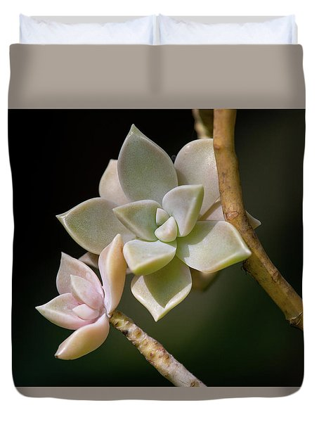 Duvet Cover featuring the photograph Ghost Plant by Dale Kincaid