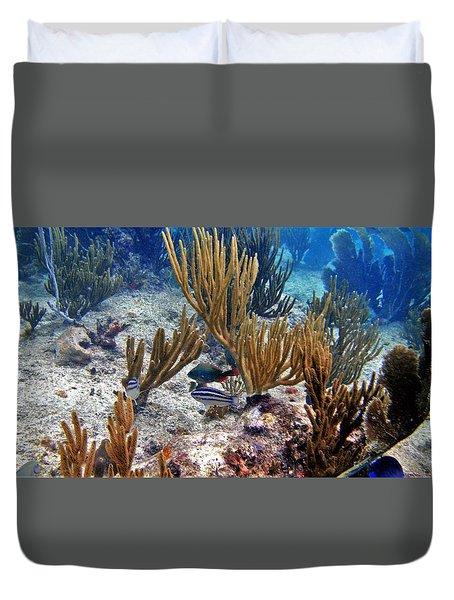 Gorgonian Parrotfish Duvet Cover