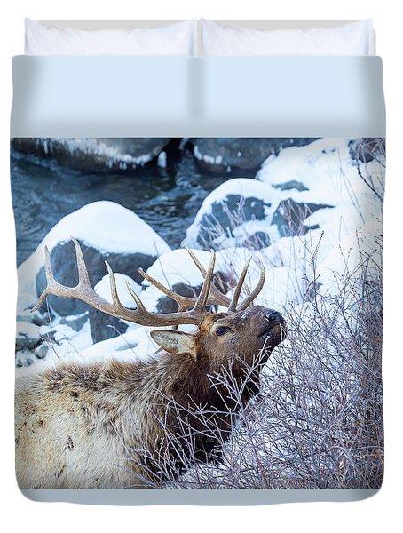 Grazing Elk Duvet Cover