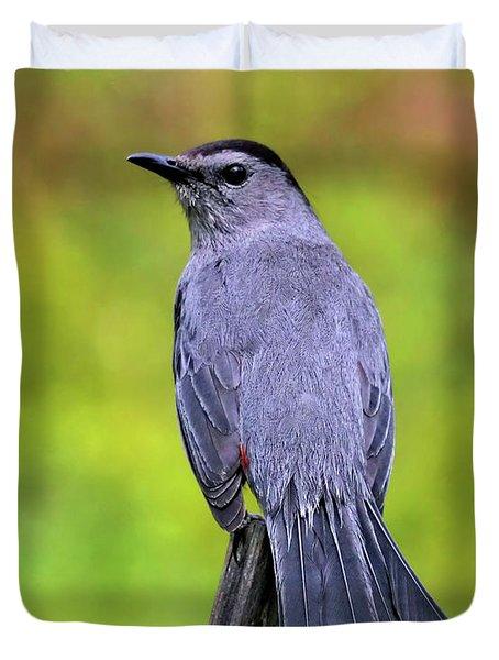 Grey Catbird Duvet Cover