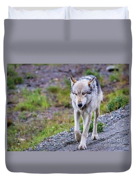 Grey Wolf In Denali National Park, Alaska Duvet Cover