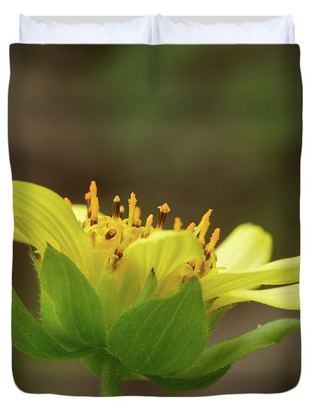 Hairy Leafcup Duvet Cover