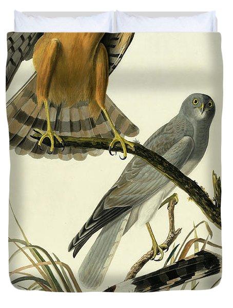 Hen Harrier, Circus Cyaneus By Audubon Duvet Cover