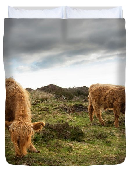 Highland Cattle Feeding At Baslow Edge Duvet Cover