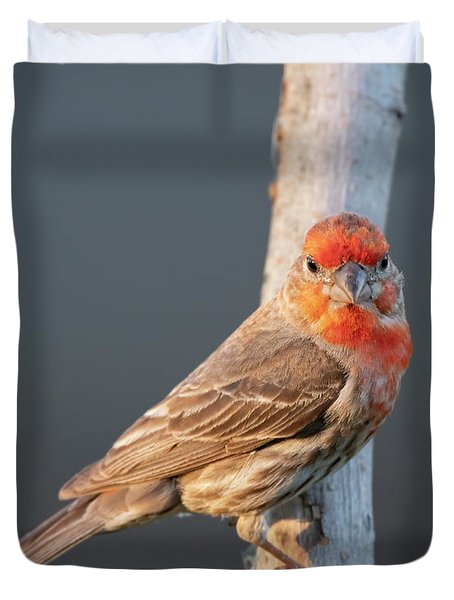 House Finch On A Perch Duvet Cover