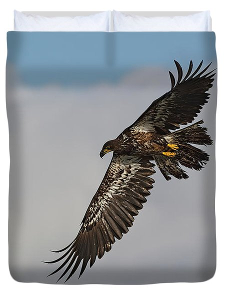 Immature Bald Eagle  Duvet Cover