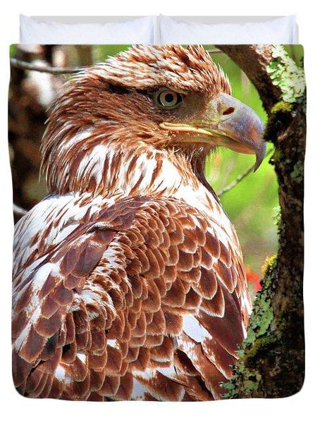 Immature Eagle Duvet Cover