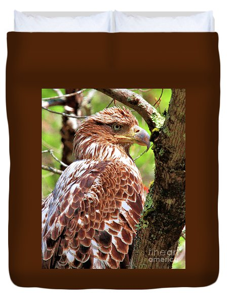 Immature Eagle Duvet Cover