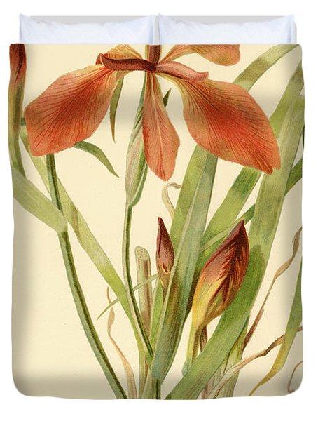 Iris Cuprea Copper Iris.  Duvet Cover