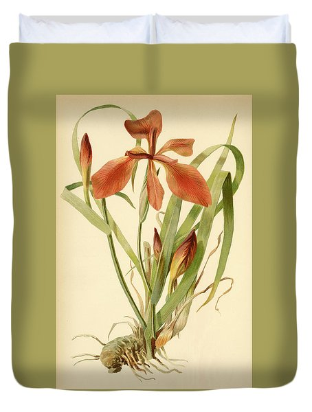Iris Cuprea Copper Iris.  Duvet Cover