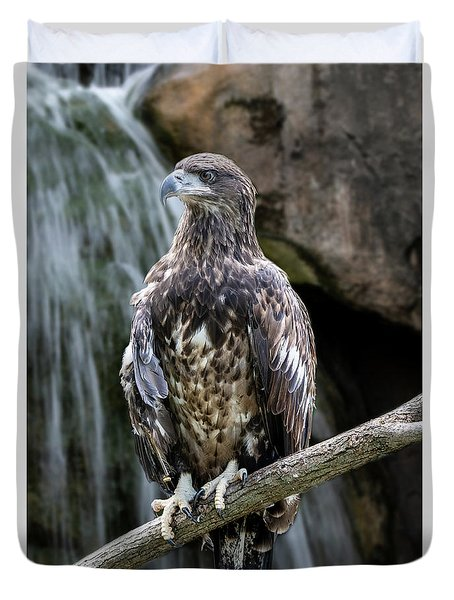 Juvenile Bald Eagle Duvet Cover