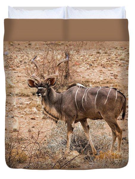 Kudu In The Kalahari Desert, Namibia Duvet Cover