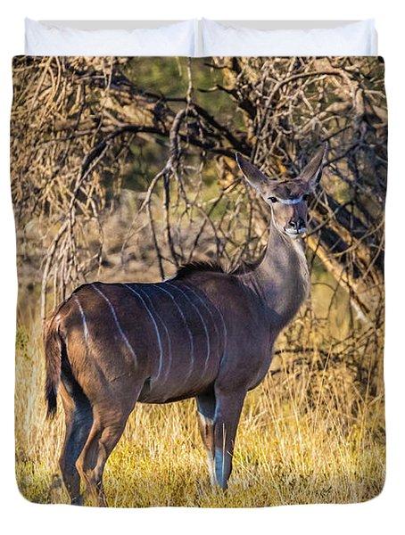 Kudu, Namibia Duvet Cover