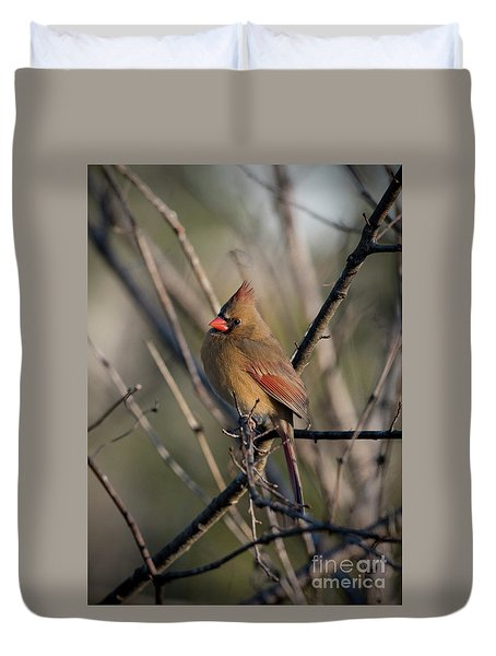 Lady Cardinal Duvet Cover