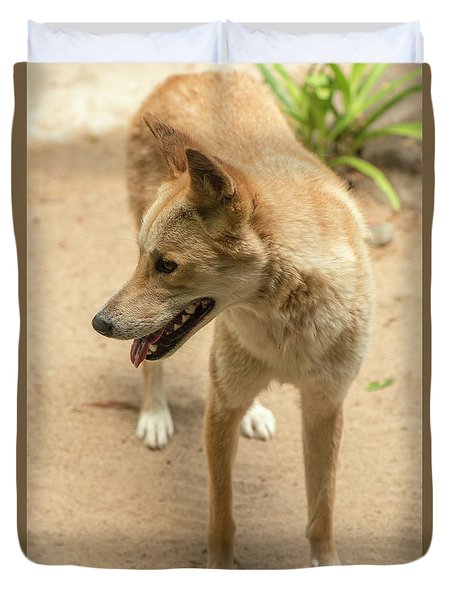Duvet Cover featuring the photograph Large Australian Dingo Outside by Rob D